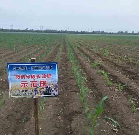 玉米案例分享
